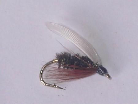 Coachman wet fly