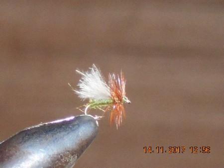 Midge fly 4