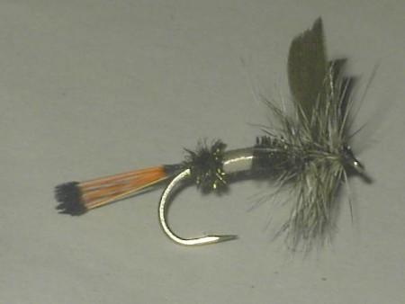 Bentz coachman dry fly