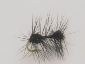 Motion ant black