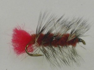 Wooley worm brown