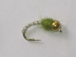 Tungsten biot nymph white