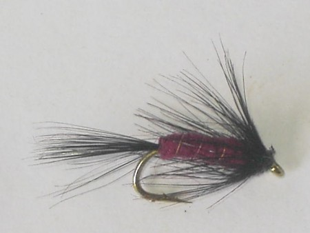 Maroon spider wet fly