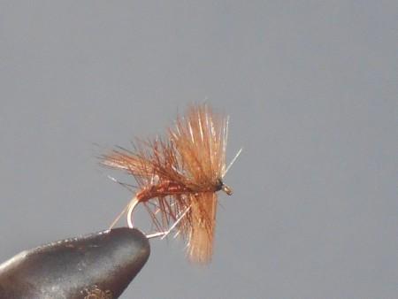 Fluttering sedge dry