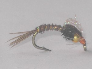 B.h bubble back emerger