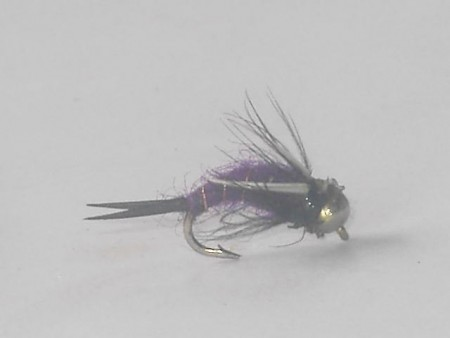 B.h purple prince