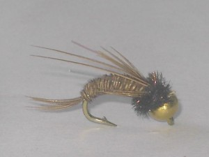 B.h swimming pheasant tail