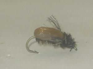 Beetle brown