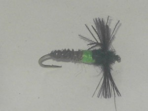 Cassed caddis