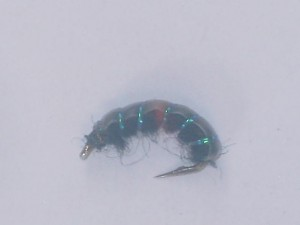 Czech nymph 1