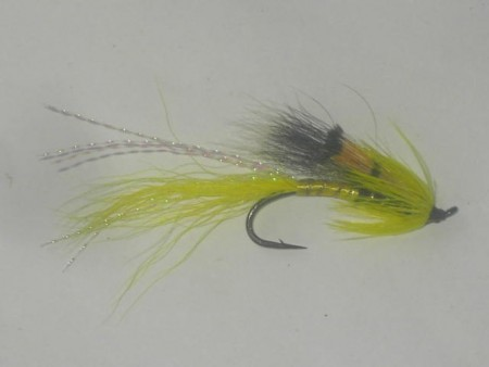Alley shrimp yellow